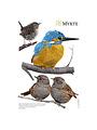 Wandtattoos Gartenvogel Mix