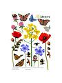 Muurstickers Insecten en Bloemen
