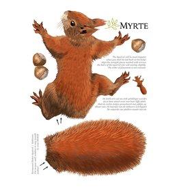 Myrte Muursticker Eekhoorn