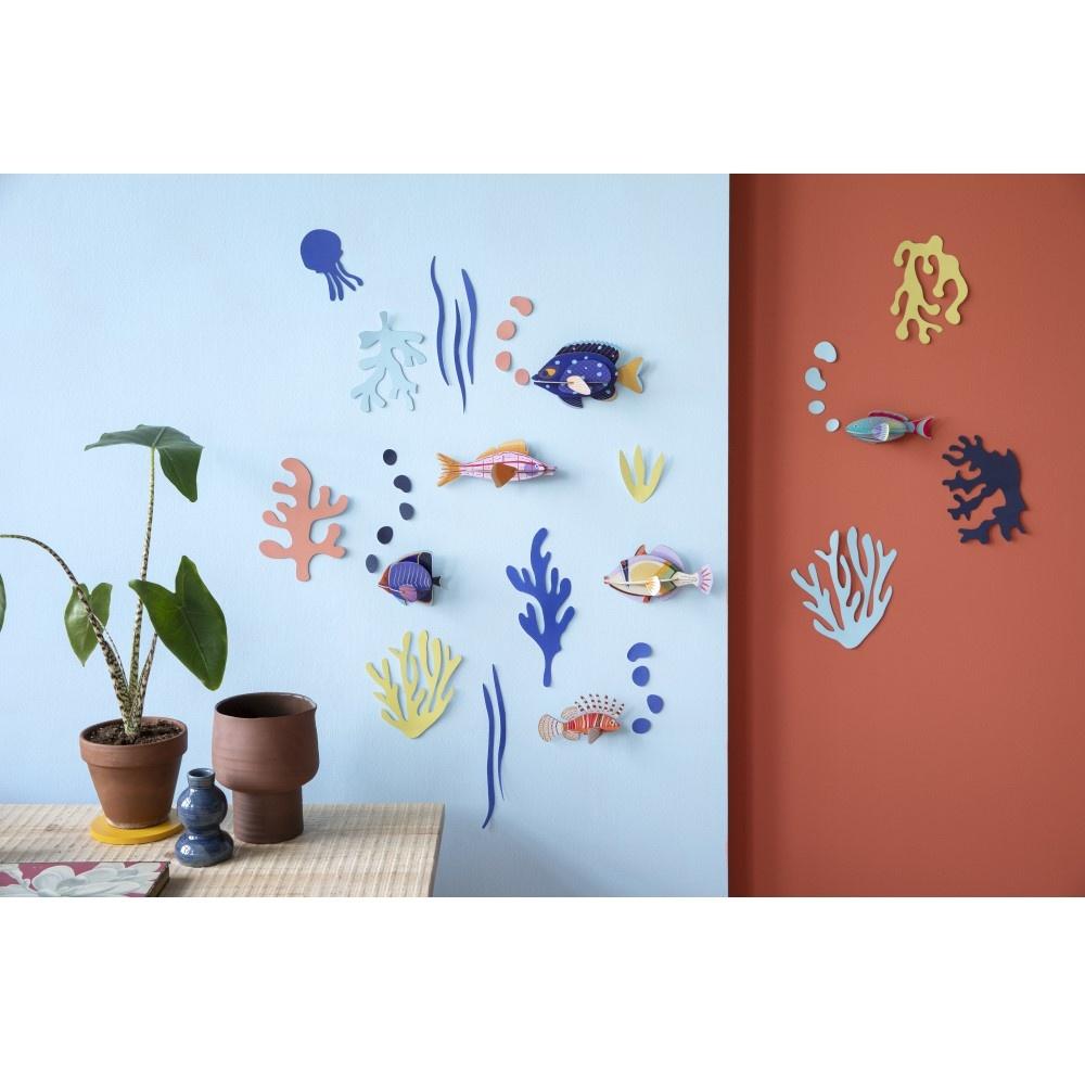Wall of Curiosities, Fish Hobbyist