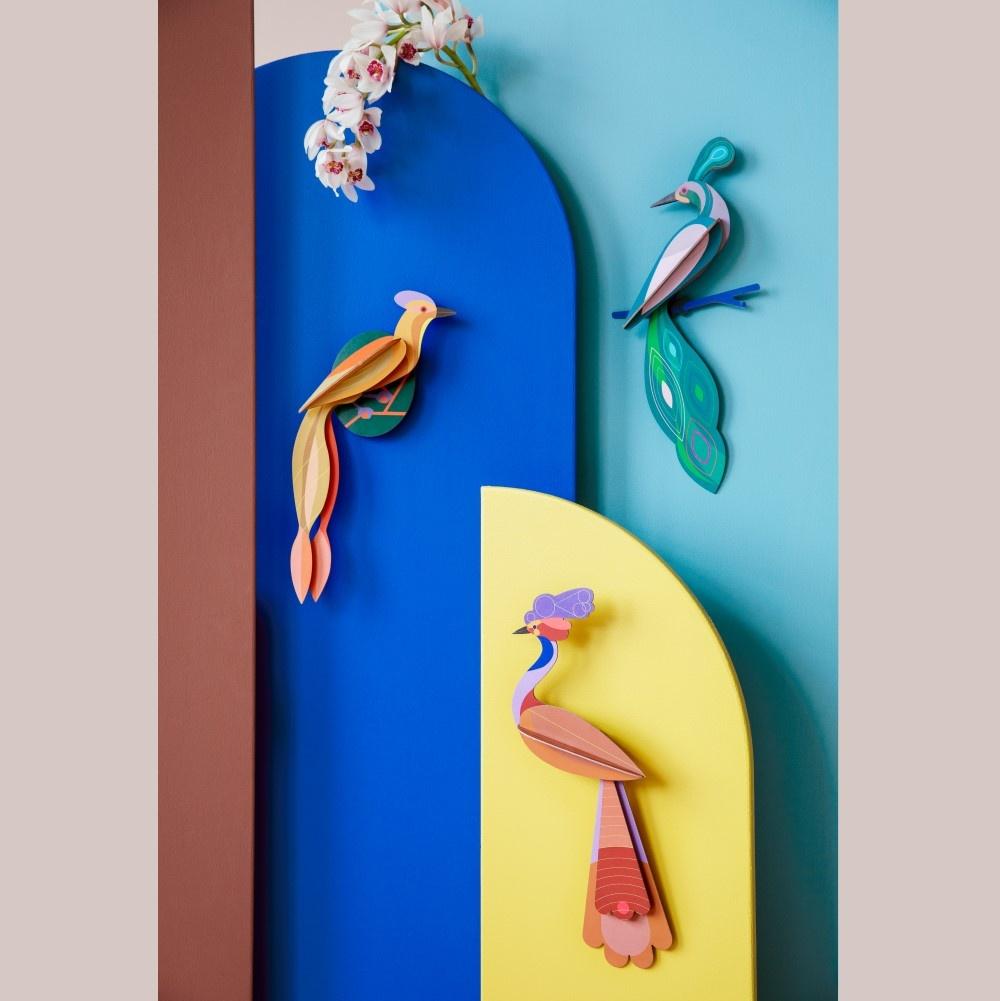 Paradise Bird, Olango