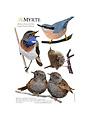 Muursticker Vogels in Blauw en Bruin