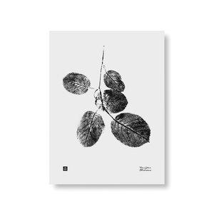 Teemu Järvi  Poster Goat Willow Branch 30x40cm