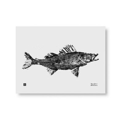 Teemu Järvi  Poster Zander – Snoekbaars 40x30cm