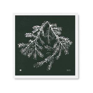 Teemu Järvi  Poster Spruce 50x50cm
