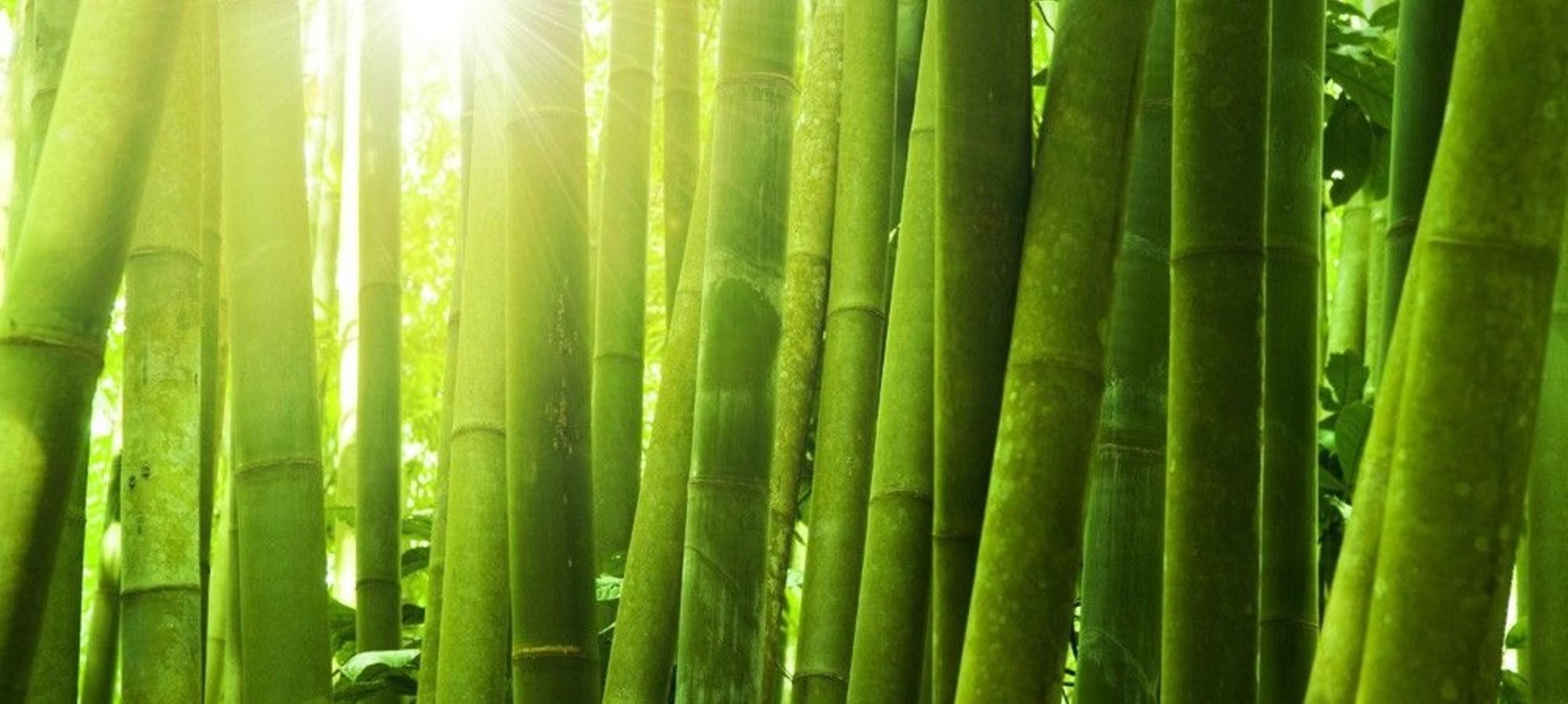 Wereld Bamboe Dag: wat kan jij met dit materiaal?