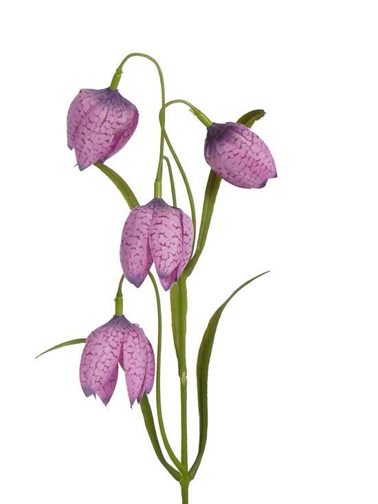 Fritillaria - Schachbrettblume 4 Blueten & 3 Sets Blaetter, 45cm