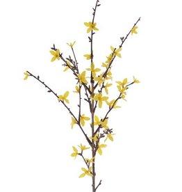Forsythienzweig  mit 41 Blüten, 88 cm