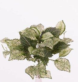 """Fittonia - Silbernetzblätter - """"selbst modellierend"""" mit 37 Blättern, 25cm"""