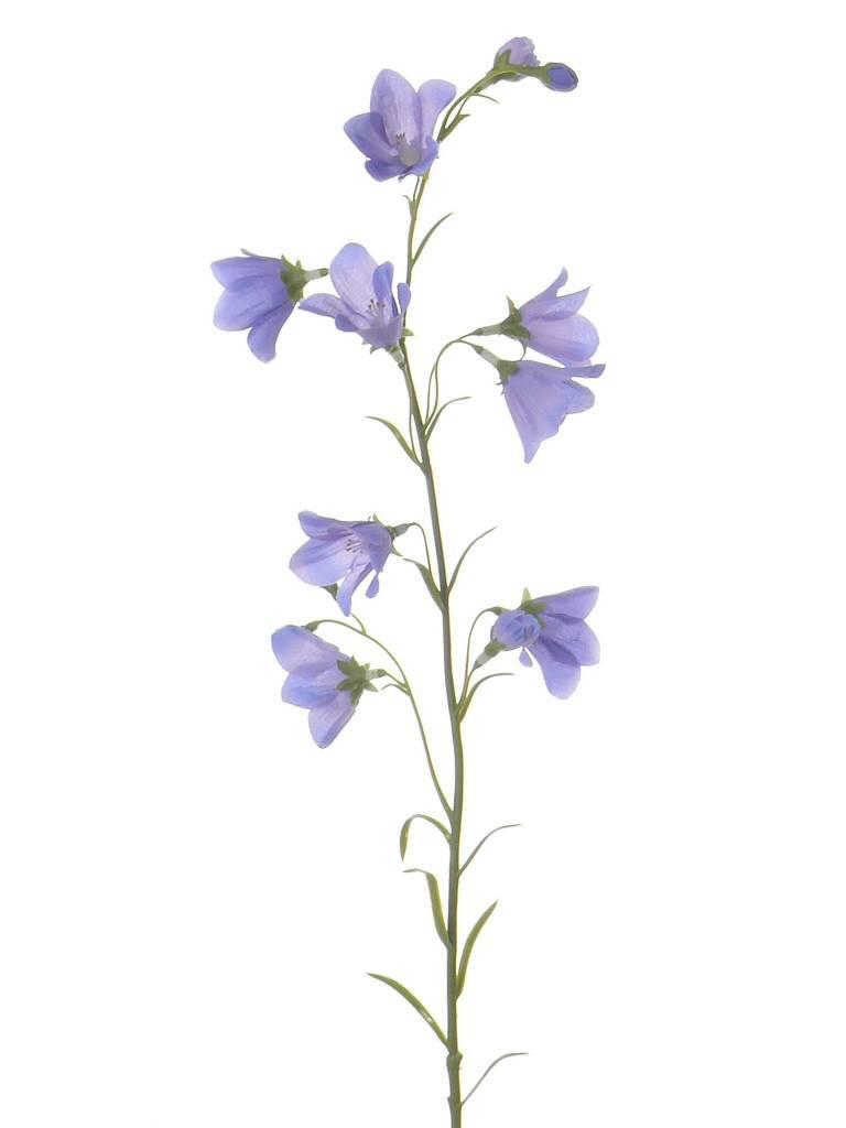 Campanula (Klokjesbloem) 70cm