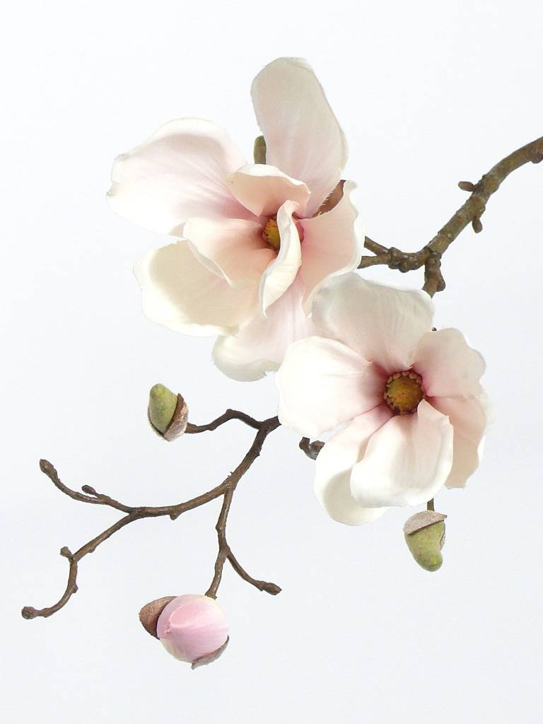 Magnolia with 2 flowers,  pick, 48cm