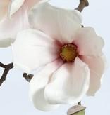 Magnolia steek 48cm
