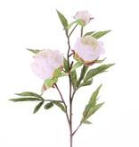 "Pioenroos ""Spring Dream"", x2flrs ø10/8cm, 1bud ø4cm & 25lvs, 73cm"