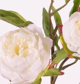 "Pfingstrose, Peonia ""Spring Dream"", mit 2 Blumen, Ø 10/8cm, 1 Knospe, Ø 4cm, 25 Blätter, 73cm"