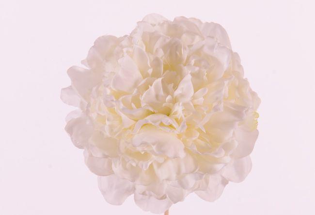 "Peonyhead (Pioen) ""Floating Flora"", Ø 15cm, x15petals, foam base"