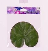 """Lotus leaf (waterlelieblad) """"Floating Flora"""", Ø 13cm (10stuks in zakje) prijs per zakje"""