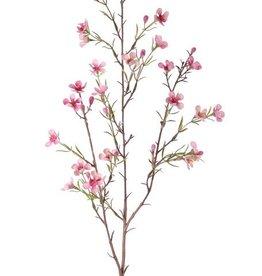 Chamelaucium uncinatum, Geraldton waxflower, Geraldton wax, 26 flores, 78cm