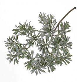 Artemisia absinthium, plastico 45cm