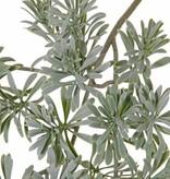 Wermut-Blattzweig, Artemisia absinthium, x25, 45cm