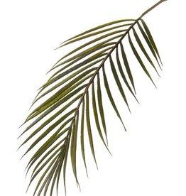 Rama Arecapalm,  37 hojas, plastico, 70cm