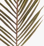 Arecapalm Zweig x 37Blt, Plastic, 70cm