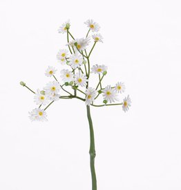 Bellis spray, corto, 24 fleurs (Ø 1 - 1,5cm), 11 capullos, 30cm