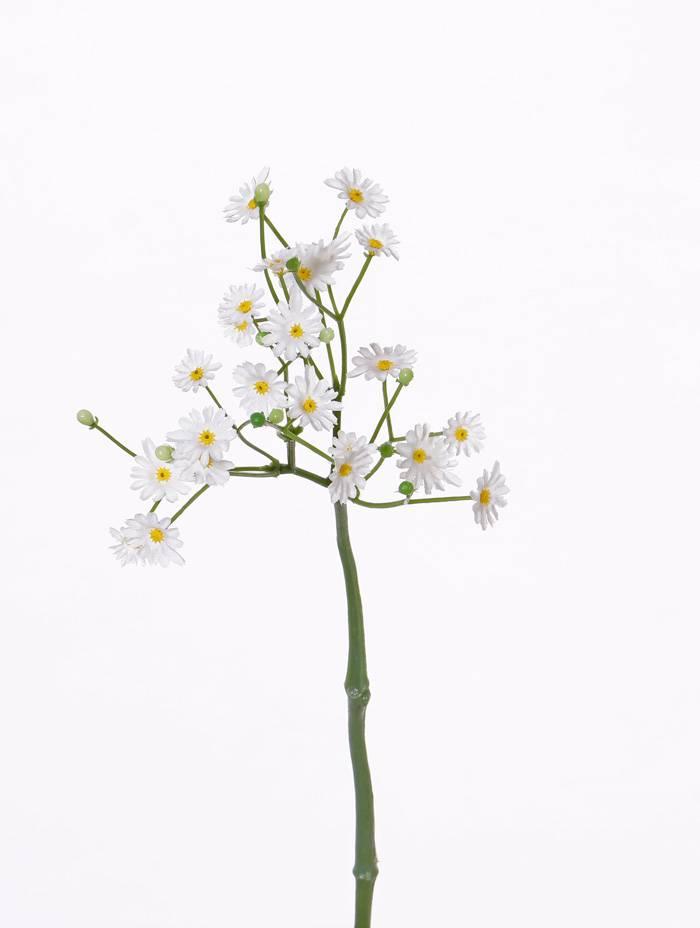 Bellis (Gänseblümchen) kurz, 24Blm& 11Knsp (Ø 1 - 1,5cm), 30cm
