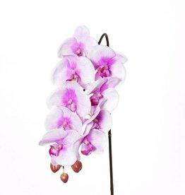 """Phalaenopsis (Orchidee) """"Natural touch"""" mit 9 Blüten und 3 Knospen, 43cm"""