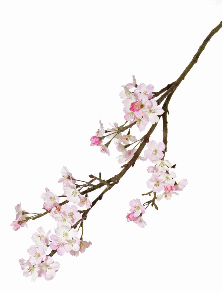 Apple blossom large, 104cm