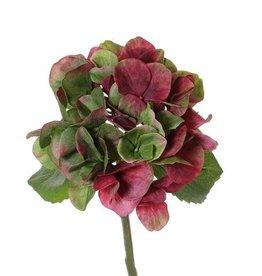 "Hortensia (Hydrangea) ""Sensitive""  Ø 13 cm, 24 pétalos, 2 hojas, 33 cm"