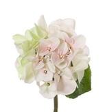 "Hortensie (Hydrangea) ""Sensitive"" x1, Ø 13CM, x24 Blütenblätter, x2Blt,33CM"