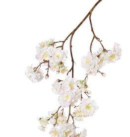 """Prunus Serrulata """"Full blossom"""", 51 flores (16L/11M/24S), 19 capullos, 91cm"""