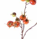 Rose hip spray, Rosa rugosa, 14 fruits, 66cm