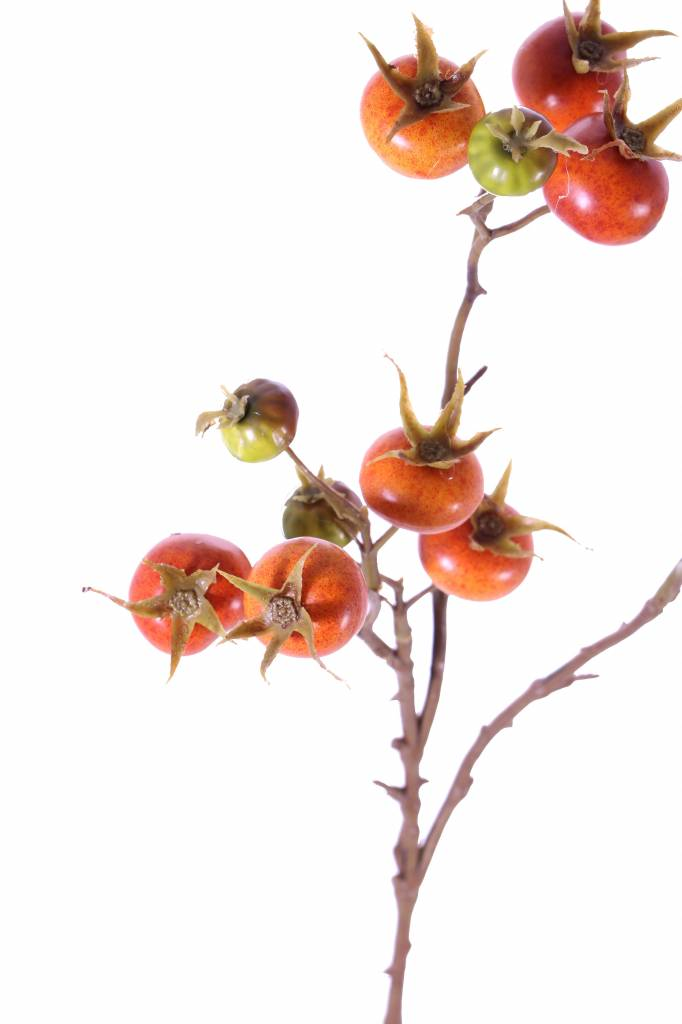 Kartoffelrose, Apfel-Rose (Rosa rugosa) mit 14 Früchten, 66cm