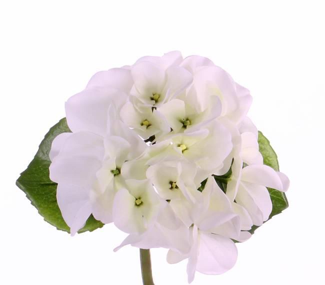 "Hortensia (Hydrangea) ""Sensitive"" x1, Ø 13CM, x24blm, x2blad, 33cm"
