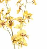 Oncidium (Tijgerorchidee) x34flrs & 11bds, 87cm