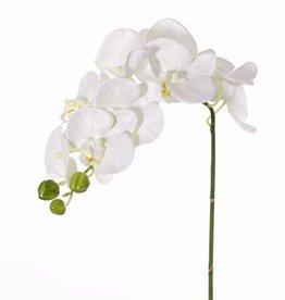 """Phalaenopsis (Orchidee) """"Noa"""" mit 9 Blüten (Ø 6 - 8cm)und 3 Knospen, 43cm"""