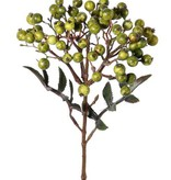 Sorb (Sorbus) bush, Ø15cm, x5 cluster berries, 2 sets of leaves, 38cm