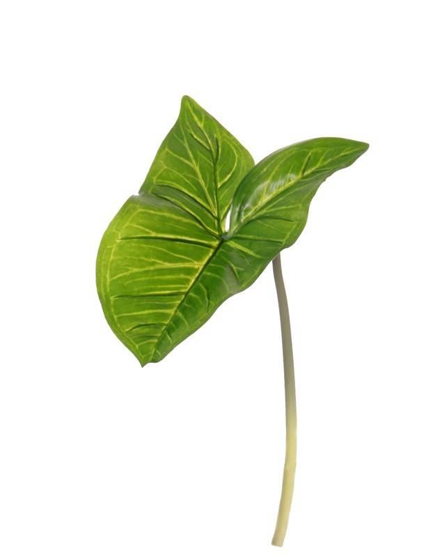 """Arum maculatum (Syngonium) """"Naturals"""" (PE), 15*23cm, 53cm"""