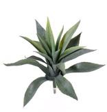 Aloe Vera -  star bush - , Ø 20cm,  18 Blätter, 30 cm