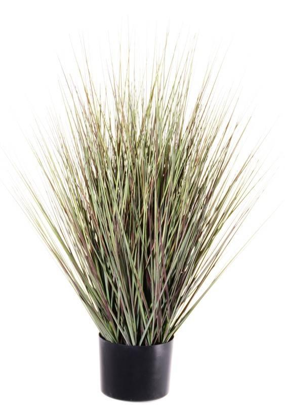 Grasbush in pot, 76cm