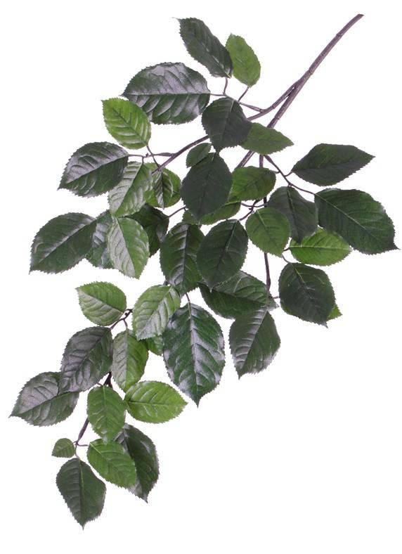 Beukentak (Fagus Sylvatica), 43 bladeren (9/ 7/ 6/ 3,5cm), 65cm, brandvertragend
