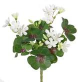Sauerklee (Oxalis) mit 14 Blüten, 14 Blättern, 22CM