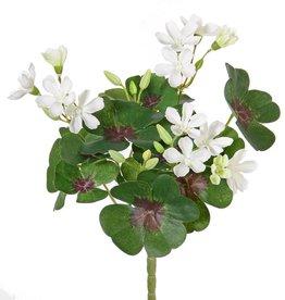 Sauerklee (Oxalis) mit 14 Blüten, 14 Blättern,  22 cm