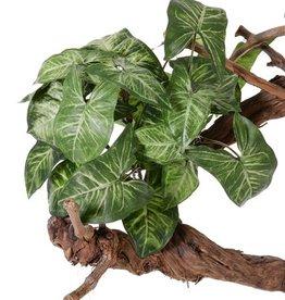 "Nephthytisplant ""Vital Greens"" x7,  25 blaadjes, 40cm, Ø 35cm"