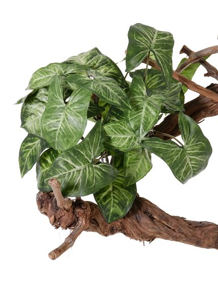 "Nephthytis ""Vital Greens"" with 7 branches,  25 lvs, 40cm, Ø 35cm"