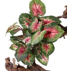 "Caladium ""Vital Greens"" x7 mit 31 Blättern, 40cm, Ø 35cm"