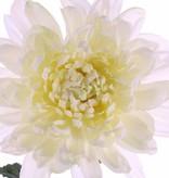 "Kugelchrysantheme ""New Art"",Ø 16cm mit 3 Blaettern 76cm"