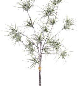 Filicopsida 4 ramas, 8 tips, 3 pcs/gruppo, white washed, 60cm