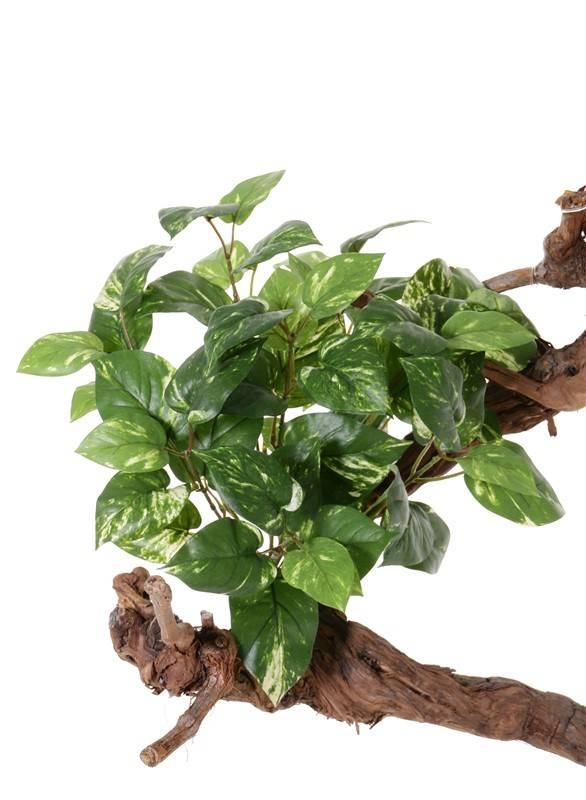 Pothosbush (Scindapsus) medium,  60 leaves, 50 cm, fire retardant